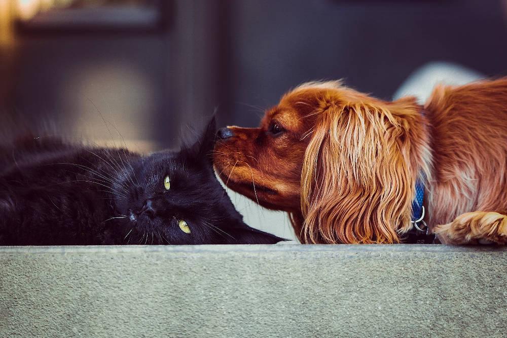 Beratung und Medizin für Ihre Haustiere