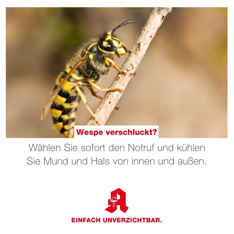 Wespe verschluckt